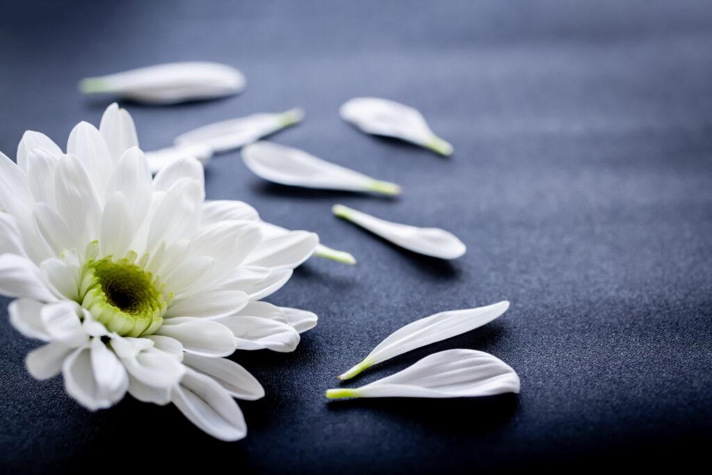 花びらイメージ